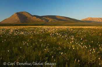 Brooks Range meets the coastal plain, Brooks Mountain Range foothills, Arctic National Wildlife Refuge, ANWR, Alaska.