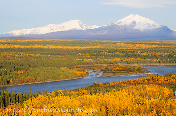 The Copper River, fall colors, Mt Sanford and Mt Drum. Copper River Basin, Wrangell - St. Elias National Park and Preserve, Alaska.